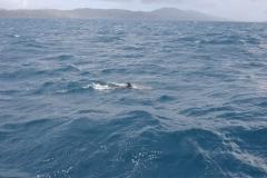 dolphinIMG_6910