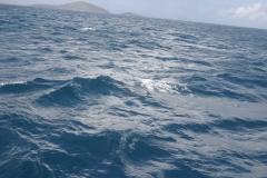 dolphinIMG_6912