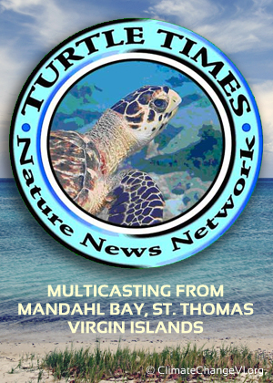 Turtle Times Nature News Network